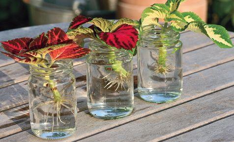Blumen Und Pflanzen Kann Man Ganz Einfach Vermehren. Wir Haben Die ... Fruhlingsblumen Pflanzen Tipps