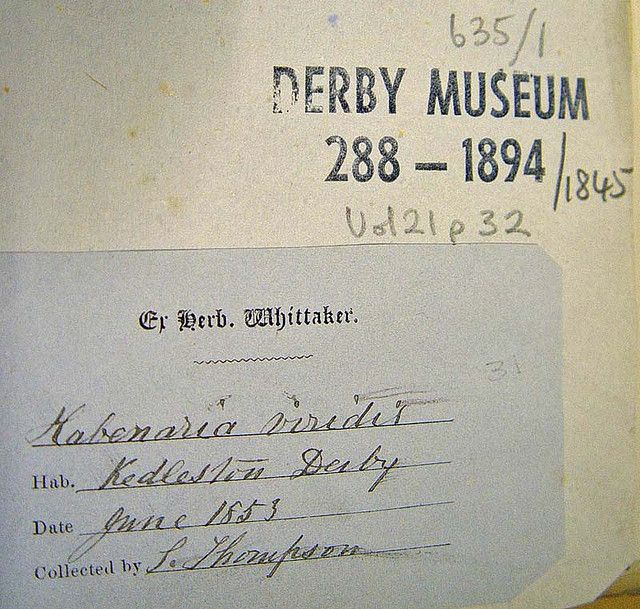 Coeloglossum viride (Frog Orchid) Herbarium label