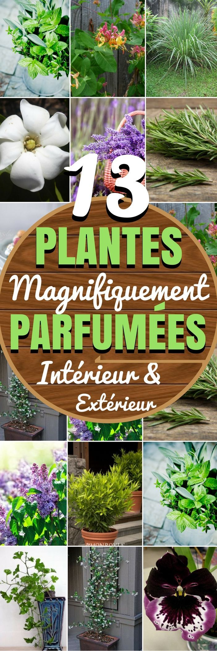 13 plantes magnifiquement parfum es int rieur ext rieur astuces jardin plantes animaux. Black Bedroom Furniture Sets. Home Design Ideas