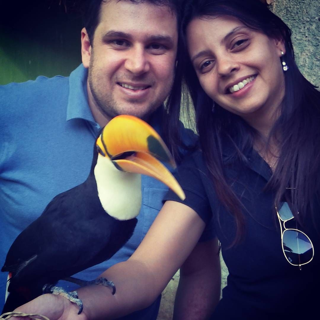 Clínica médica e cirúrgica de animais silvestres e exóticos. Projeto de fauna. Assistência em criadores. #avelegalizada #exoticvet #birds #pets #silvestres #exóticos #veterinario #tucano by exoticvet_goiania