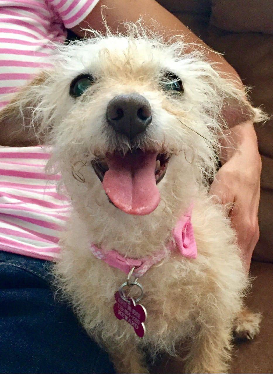 Toxirn dog for Adoption in Colorado Springs , CO. ADN
