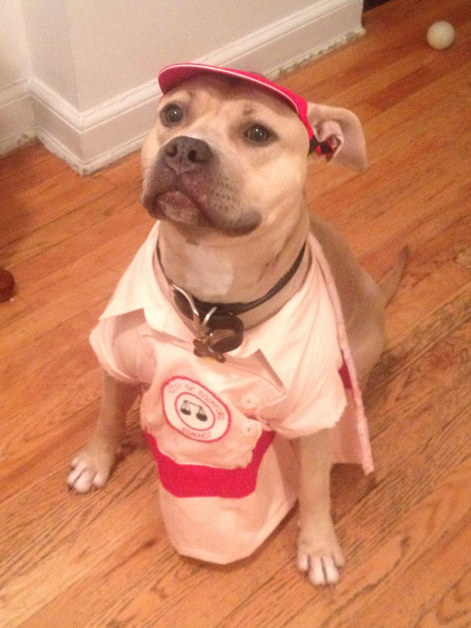 My Grand Dog Juliette Halloween Costume Marla Hooch A League