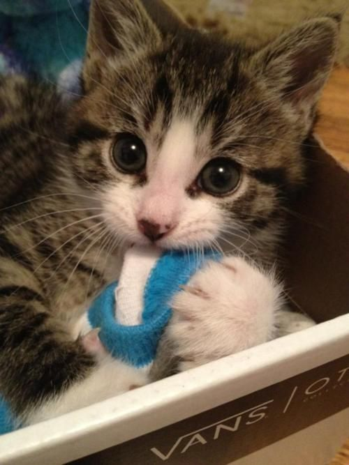 cat with socks!