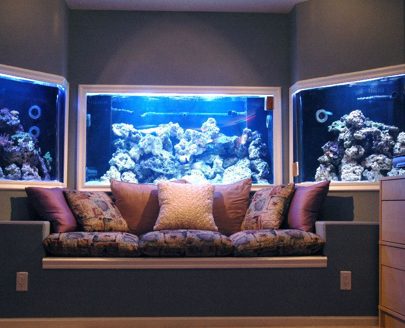 Google image result for http www for Fish tank in wall