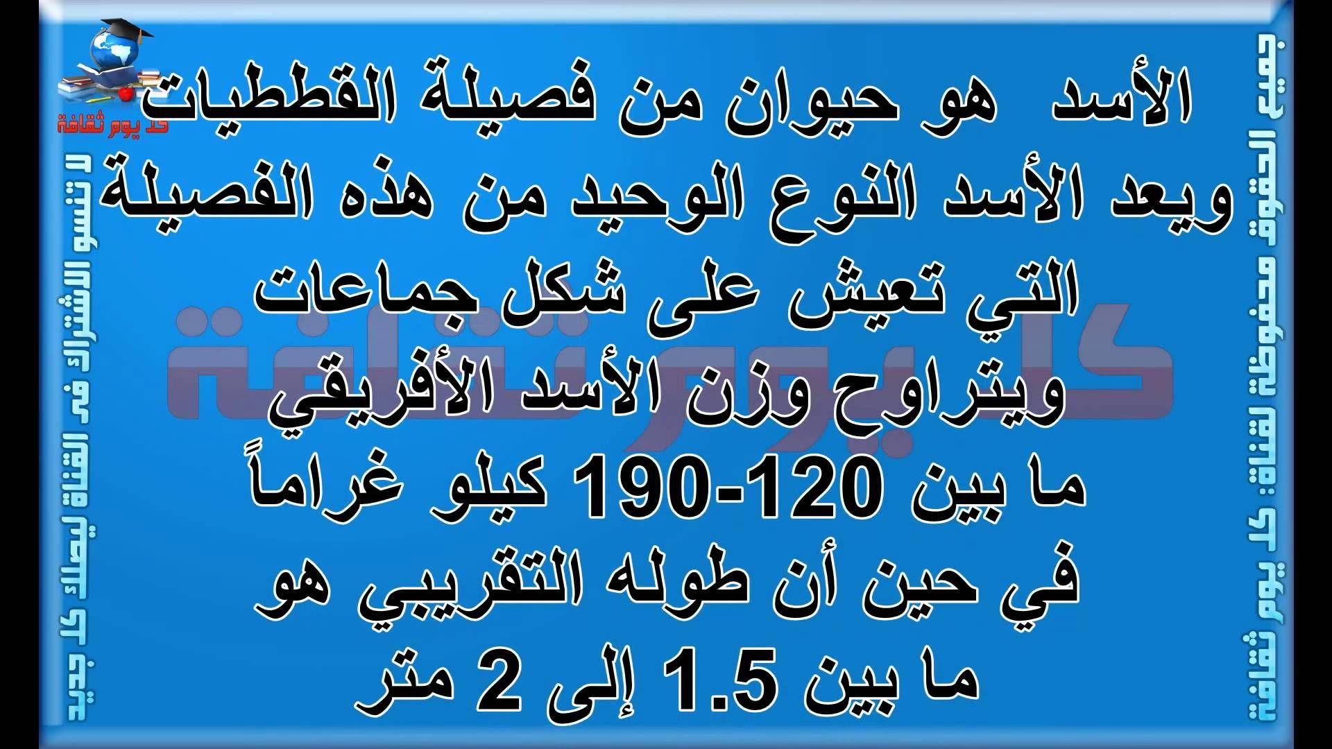 الأسد هل تعلم كم وزن وطول الاسد معلومات عن الحيوانات ثقافة عامة Youtube