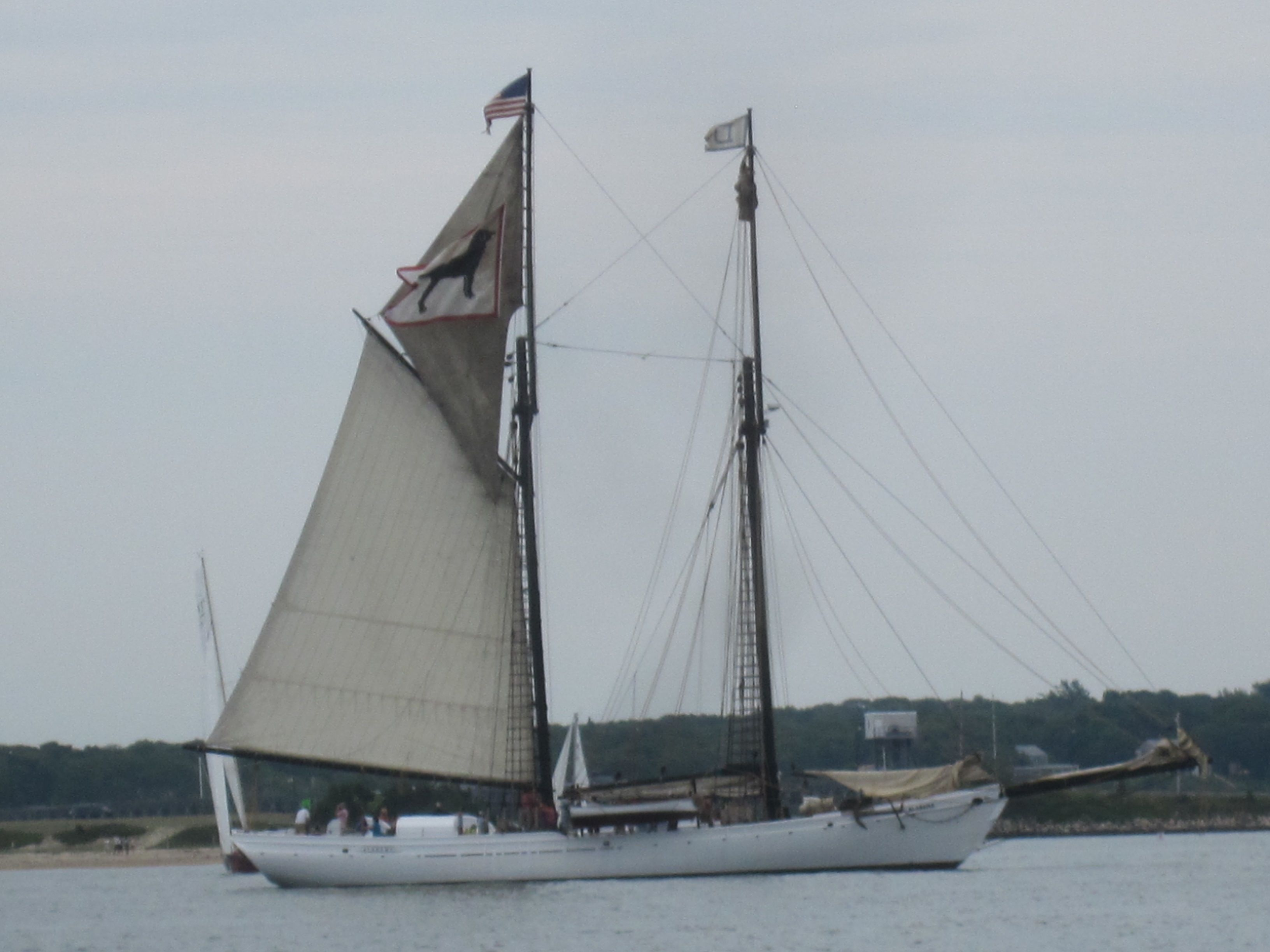 Vineyard Haven Regatta Black Dog Sailboat Martha's