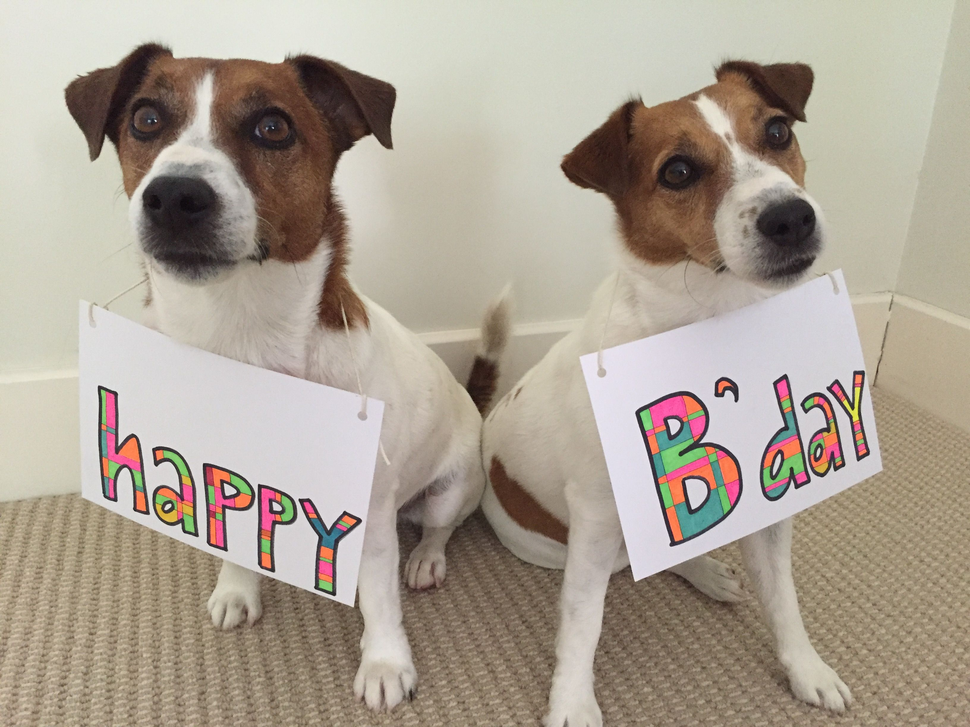 Jack Russell Birthday Greeting Jack Russell Birthday Greetings Jack Russell Terrier