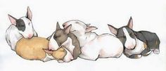 Bull Terriers love to snuggle!