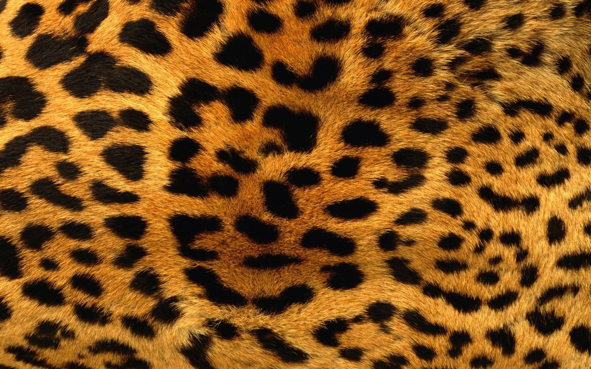 tiger print wallpaper 8 Leopard print wallpaper