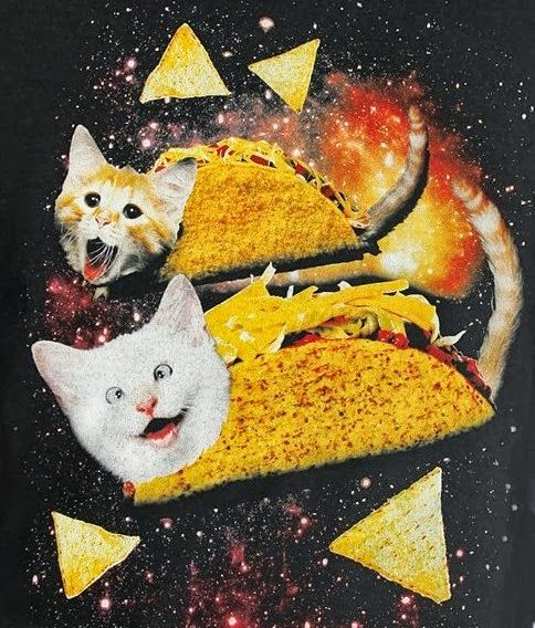 Catladyland: Cats are Funny: Taco-Cats in Space? Heck Yes!