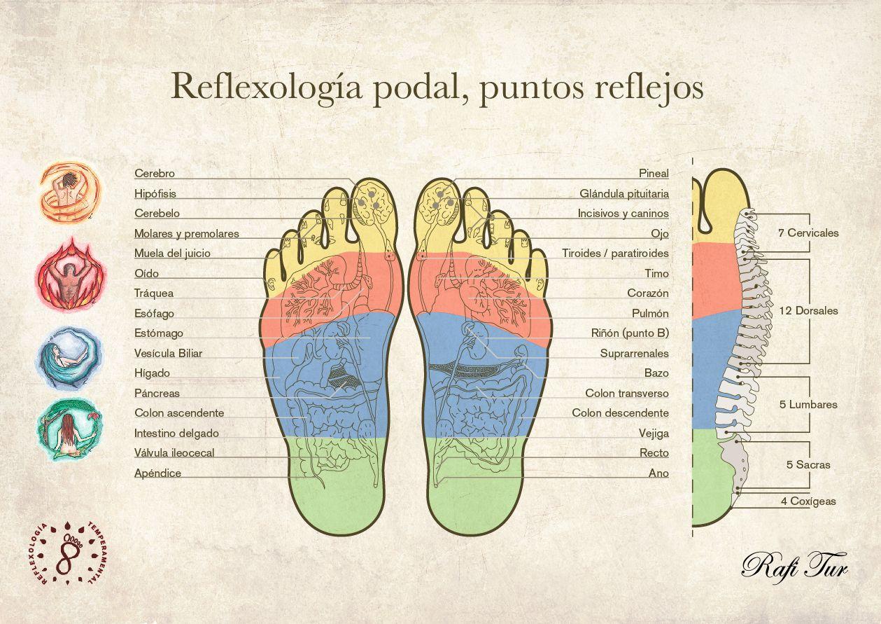 Rafi Tur / Mapa puntos reflejos Reflexologia Podal . lectura ...