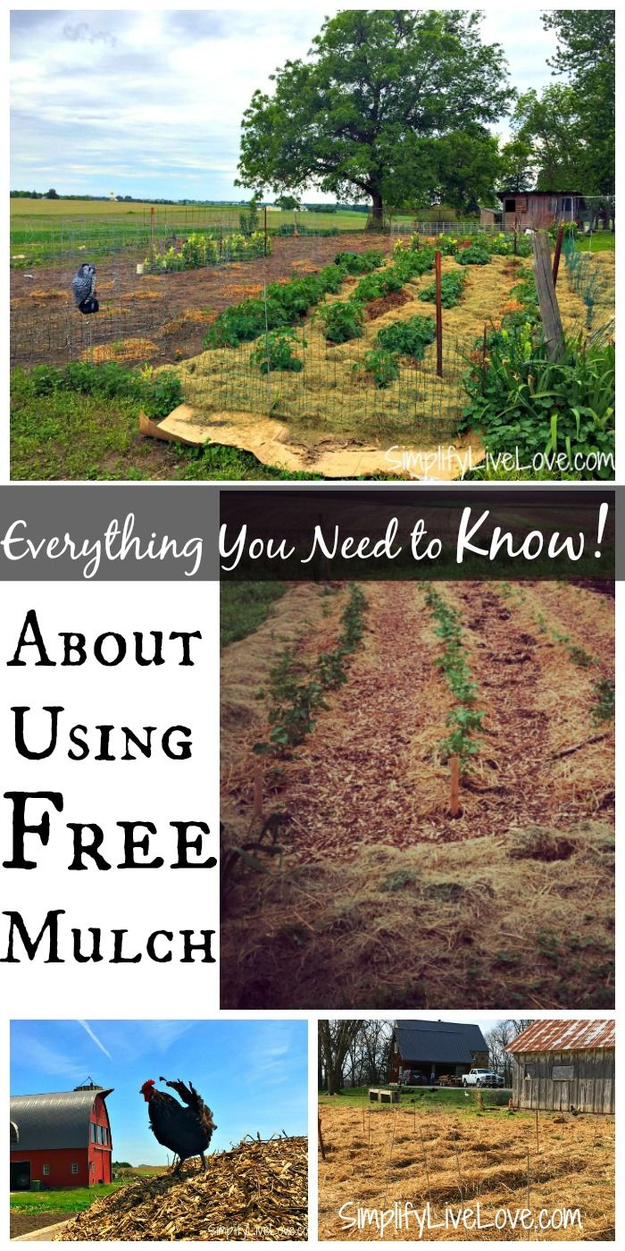 You can save a lot of money on your garden by using free
