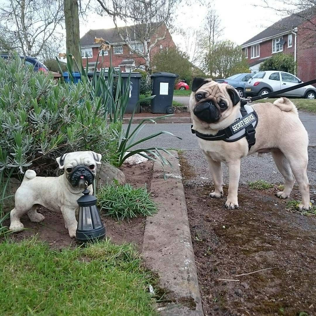 Pin On Pugs Proud