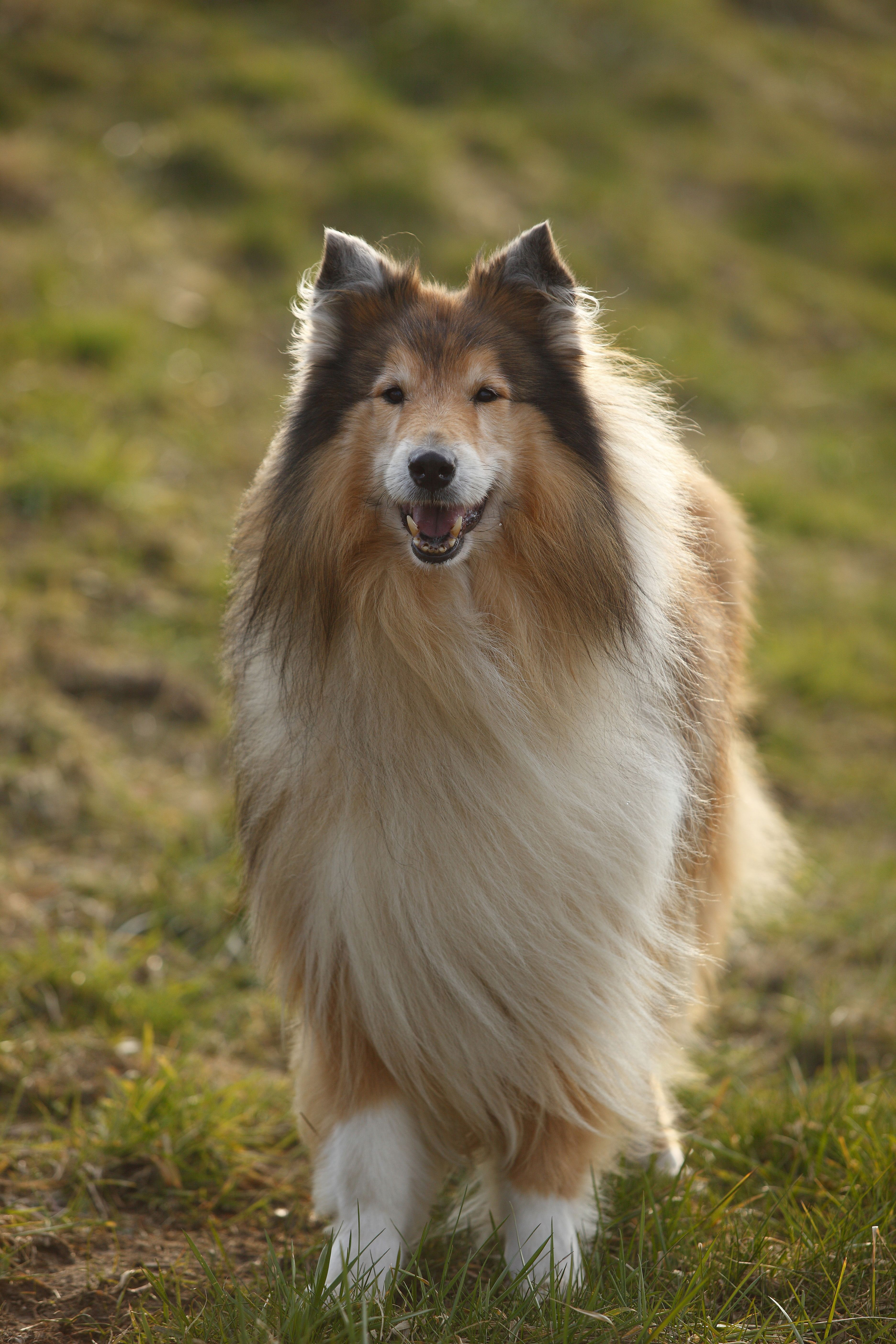 These Dog Breeds Are The Most Intelligent Experts Say Large Dog