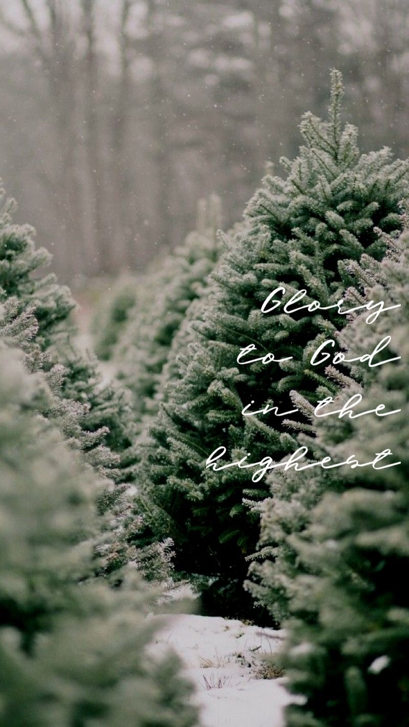 Pin By Esther Stoller On Phone Wallpaper Christmas Tree Photography Full Christmas Tree Christmas Tree Farm