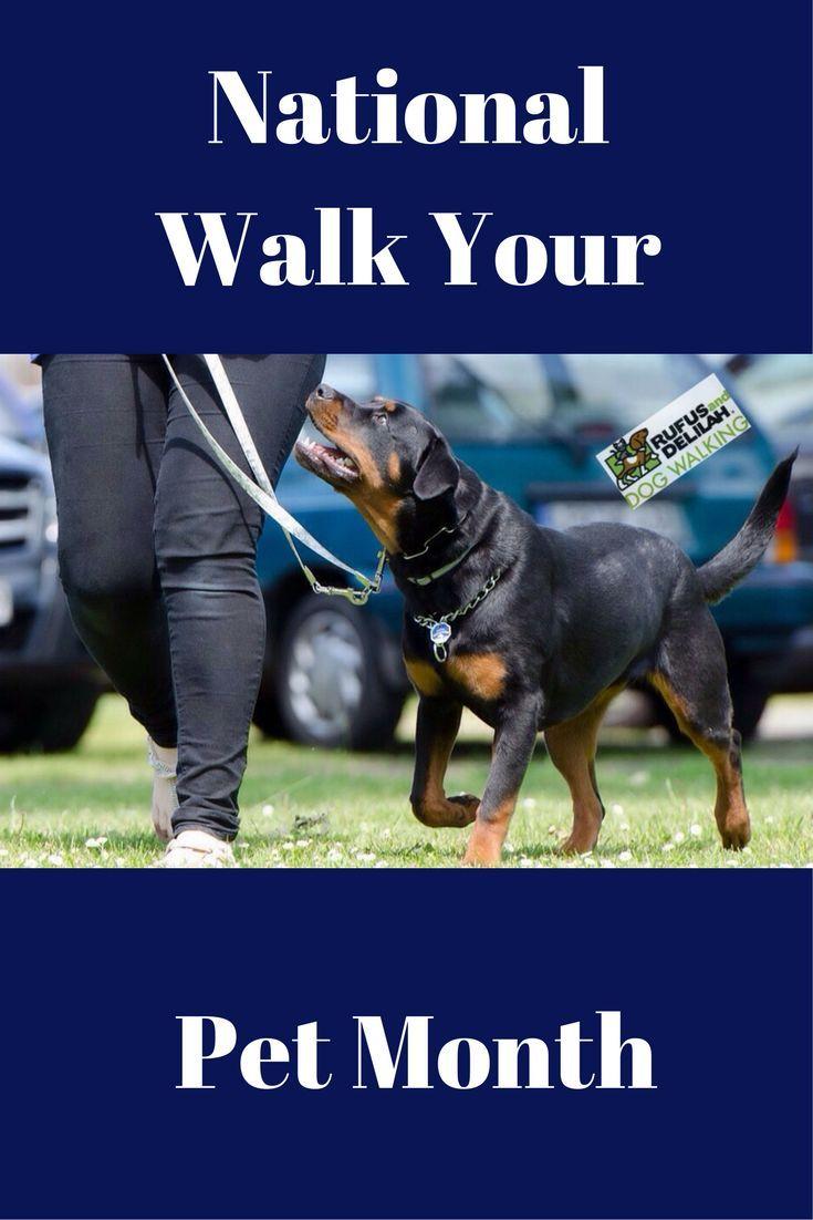National Walk Your Pet Month Dog Training Rottweiler Training