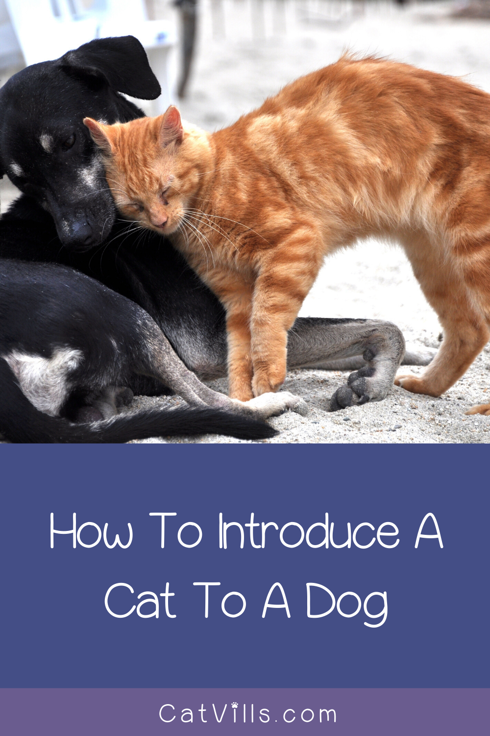 The Best Way To Introduce A Dog To A Cat Life Cats Introducing Kitten To Dog Cats Cat Training