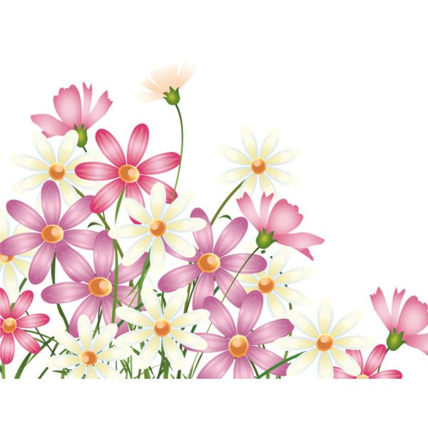 Spring 2015 2 2 Preobrazovannyj Png Liked On Polyvore Featuring Flowers Floral Corner Borders And Pi Cherry Blossom Wall Art Flower Art Flower Clipart