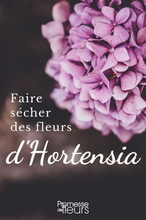 Decouvrez Comment Bien Faire Secher Vos Fleurs D Hortensia Naturellement Et En Conservant Leurs Couleurs Fleursechee Dried Hydrangeas Hydrangea Flower Flowers
