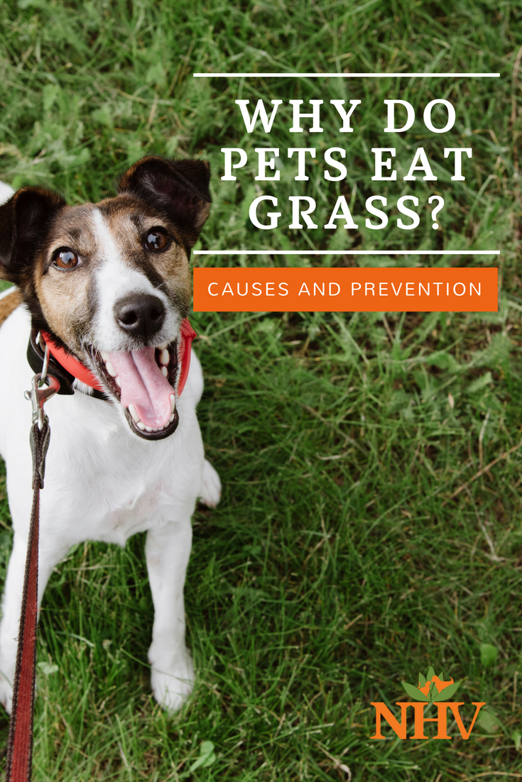 Why Does My Pet Eat Grass? Dogs eating grass, Sick dog, Pets