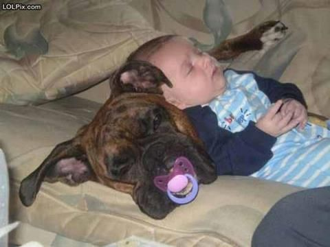 Nap time for the dog and baby.