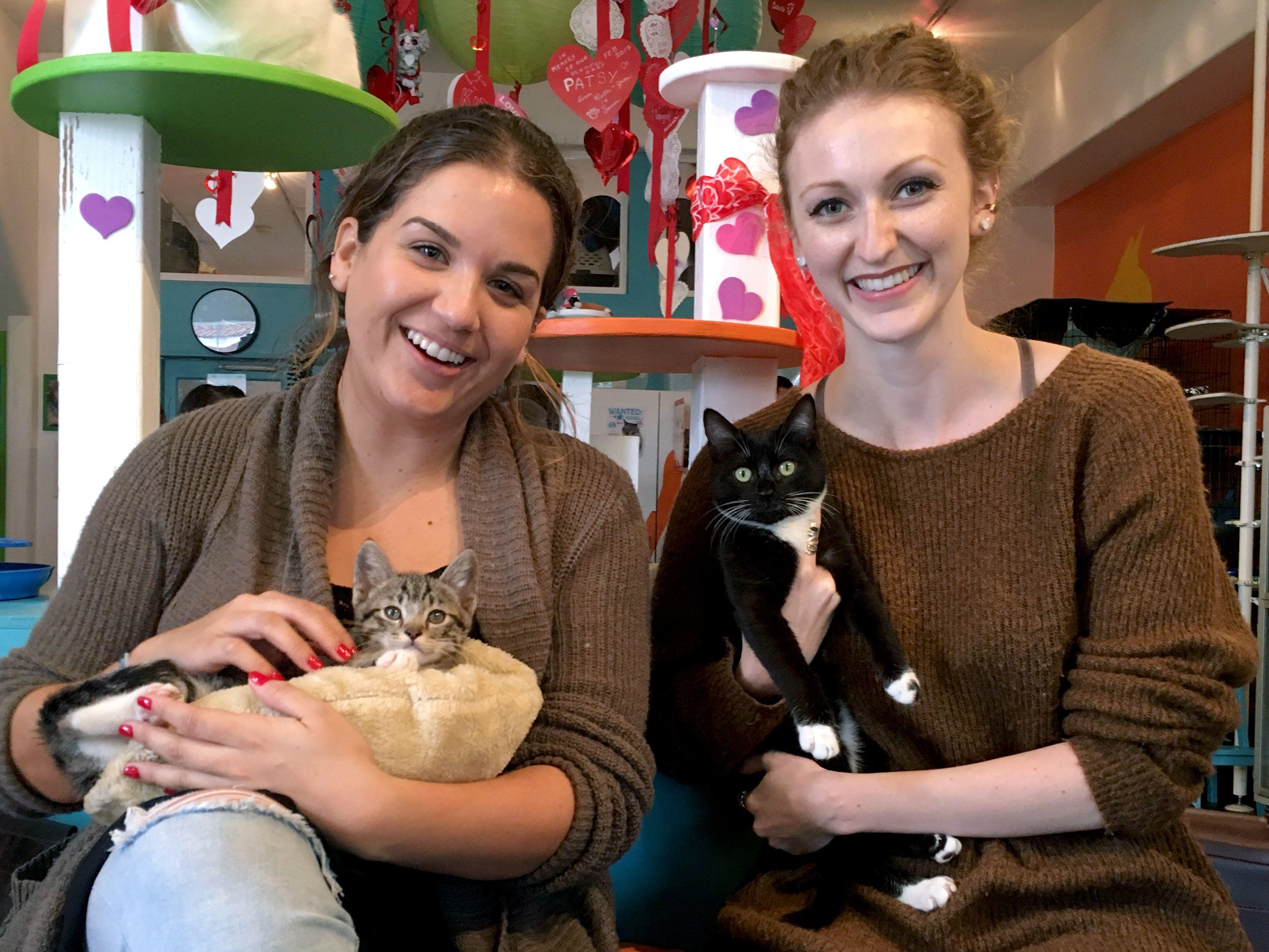 Kittens Lin Manuel Miranda and Alexander Graham Bell prove