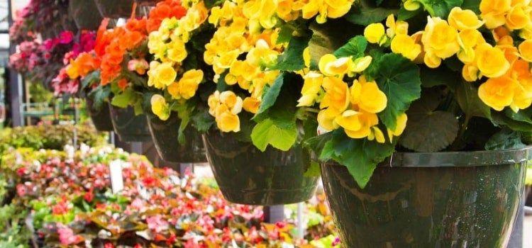 Plantas De Jardin Para Todo El Ano