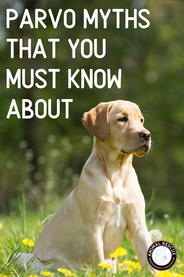 Myths about Parvo and what you need to know to keep your