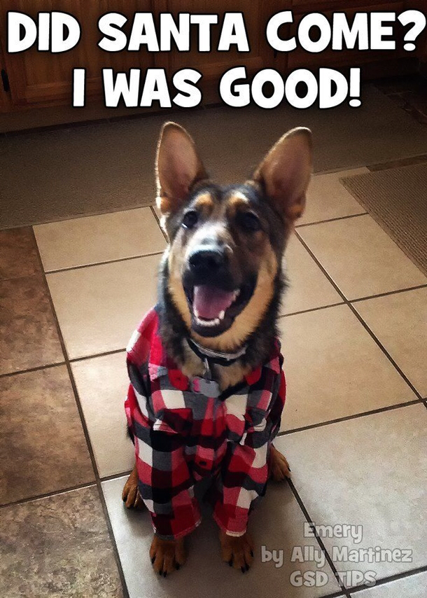 Funny Dog Christmas Pictures With Captions