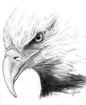 Bald eagle sketch by tony galvan