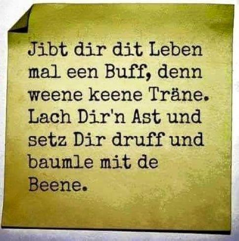 17 best images about berliner schnauze on pinterest   berliner