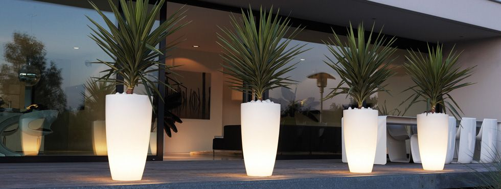 Perfect Image Result For Large Pot Plants Nz