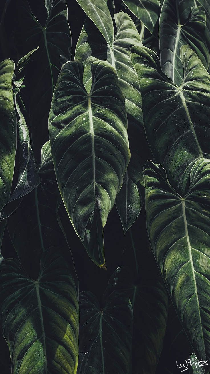 10 Tropical Jungle iPhone X Wallpapers by Preppy Wallpapers from preppywallpapers.com