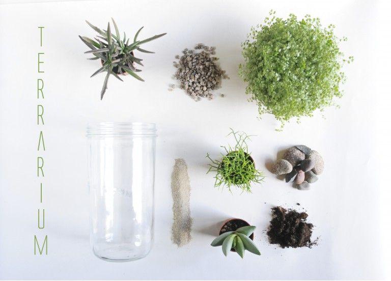 terrarium diy mes plantes en bocal de verre little. Black Bedroom Furniture Sets. Home Design Ideas