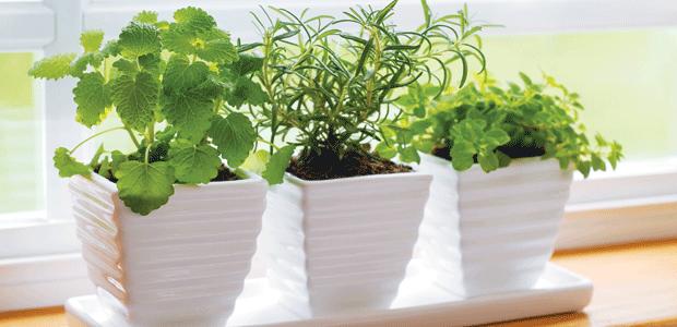 17 Best 1000 images about my herb garden on Pinterest Gardens