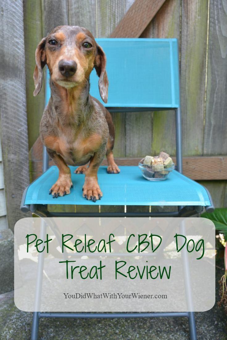 Best Hemp CBD Dog Treats Pet Releaf Review Cbd dog