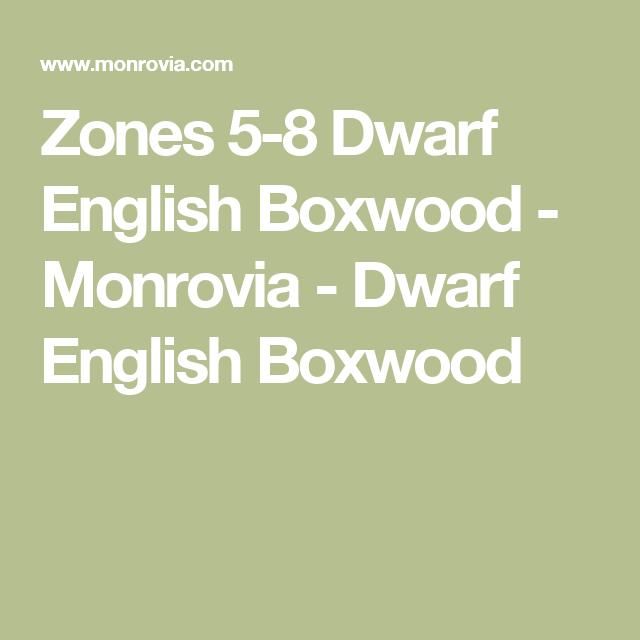 Zones 5 8 Dwarf English Boxwood Monrovia Dwarf English Boxwood
