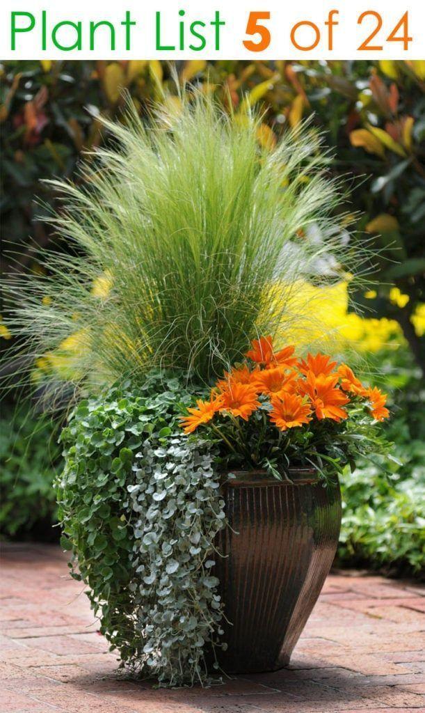 19 planting Patio garden ideas