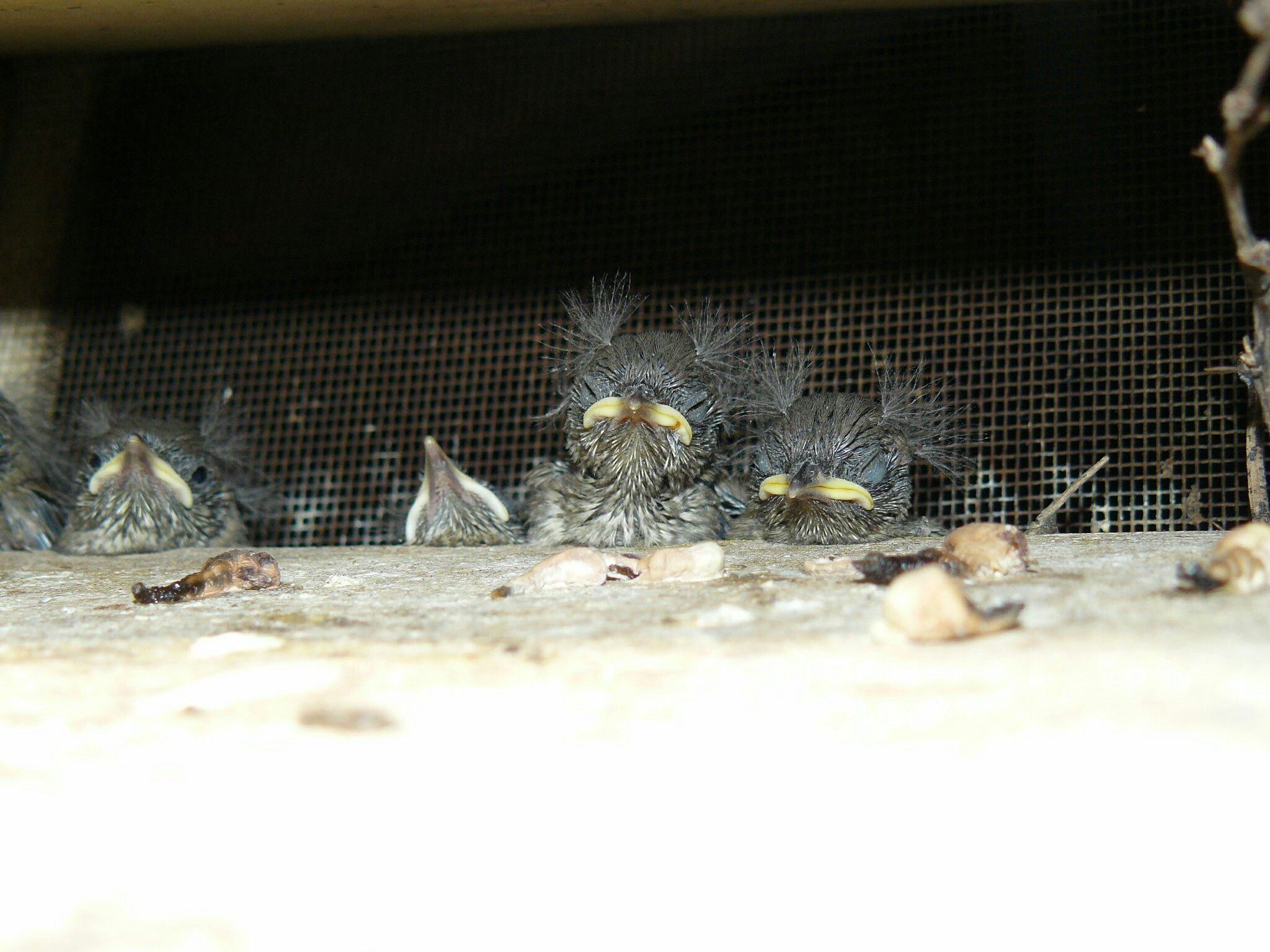 This Is Taken In The Roof Vent Above Our Deck I Just Love It Fish Pet Roof Vents Bird Houses