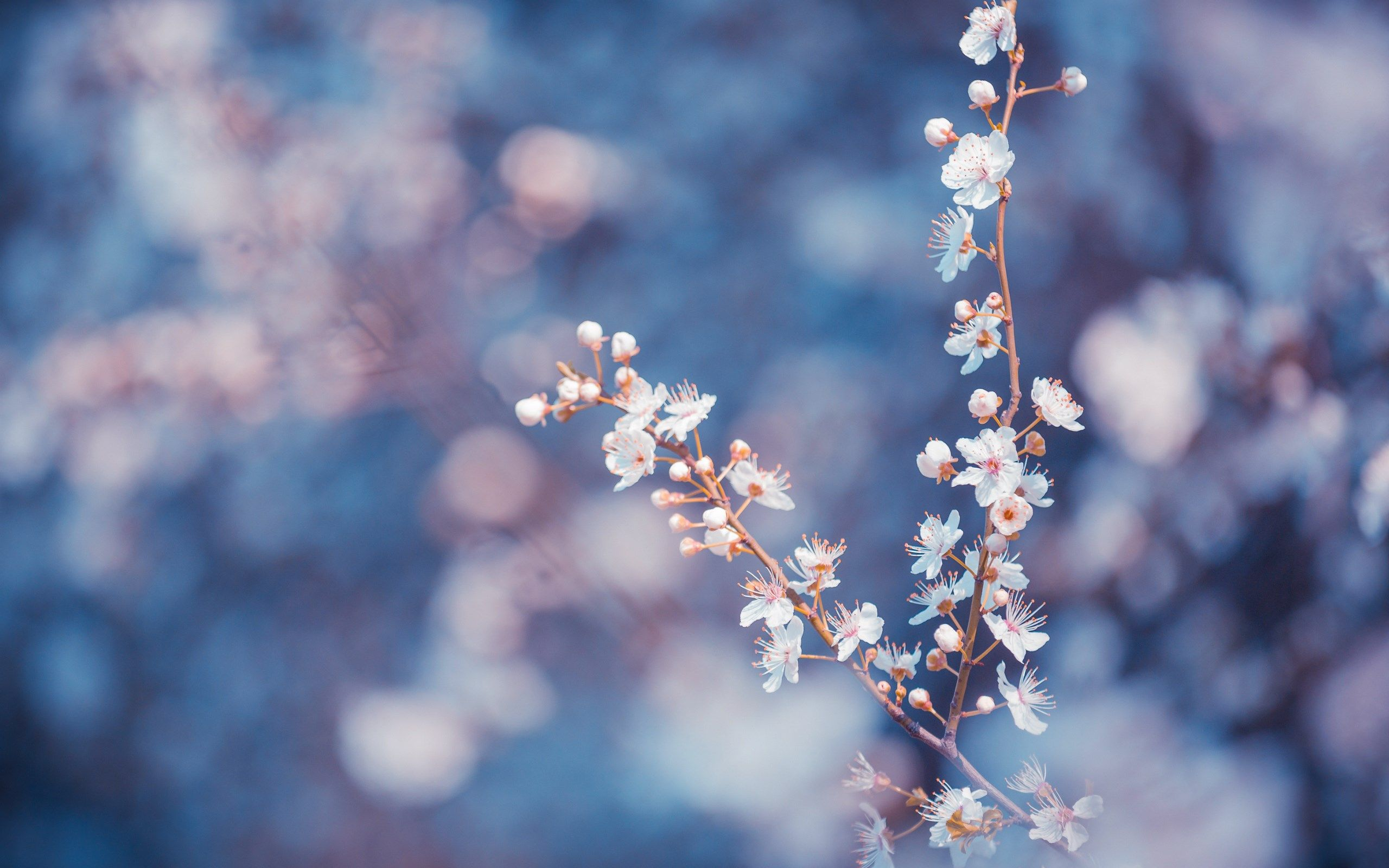 Idea By Salwa Saeed On Flowers Roses Fruits Tumblr
