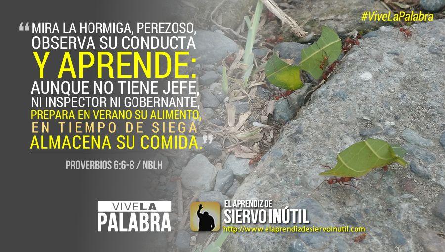 #ViveLaPalabra - Proverbios 6:6-8
