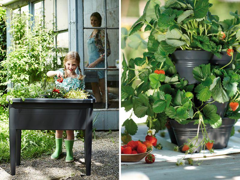 Gemüse Vom Balkon | Hats, Garten And Oder Gemuse Auf Dem Balkon Hochbeet Garten