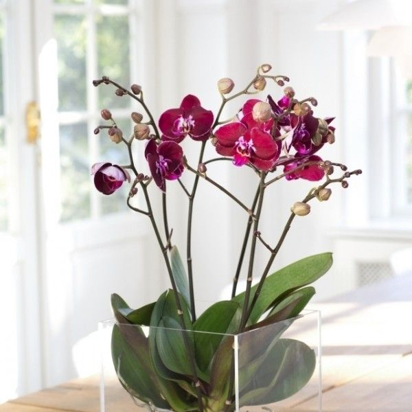 tipps orchideen pflege wurzeln durchsichtige kunststoff. Black Bedroom Furniture Sets. Home Design Ideas
