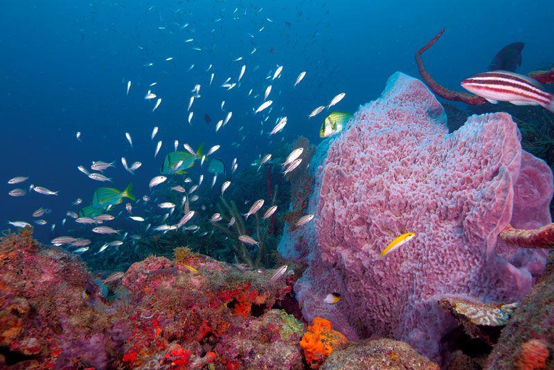 Fishes On Reef Cove 3 Trinidad Tobago Trinidad Island