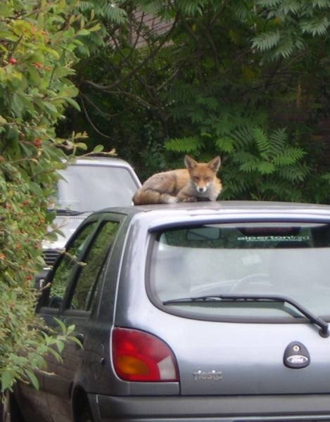 Carfax Website Lovely 17 Best Images About the Car Fox On