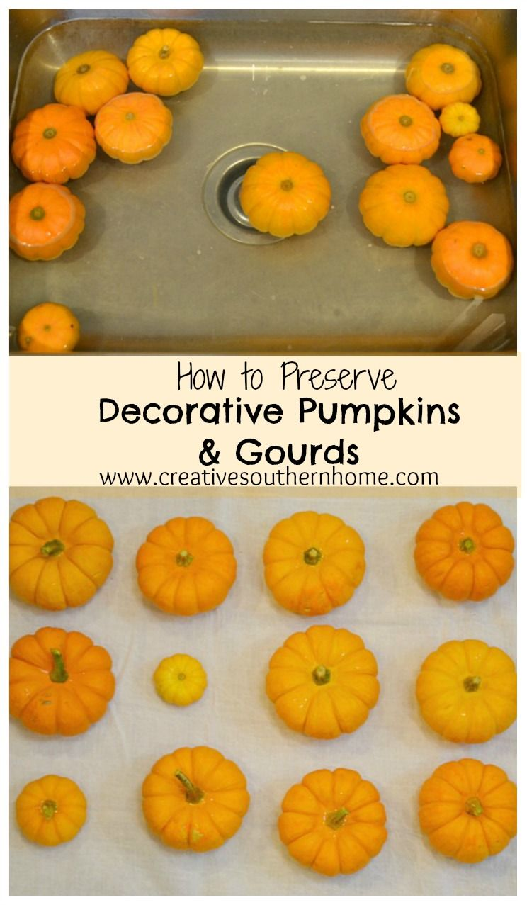 How to preserve decorative pumpkins and gourds.  Plus clean your sink at the same time! www.creativesouthernhome.com