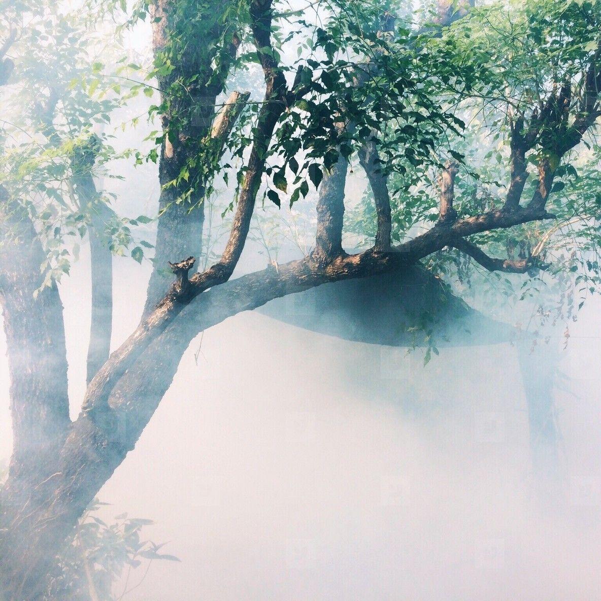 Misty autumn forest tree / ywft