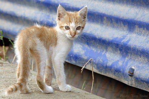 "CAT LADY Street Sign cat breed feline kitty kitten 18/"" Wide Indoor//Outdoor"