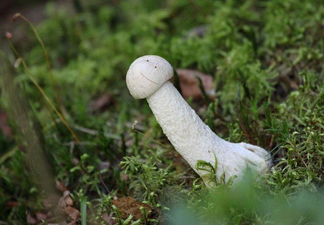 Sienestäjän unelmako! Jätkän `herkkunuljaska´, ol... - Ilta-Sanomat