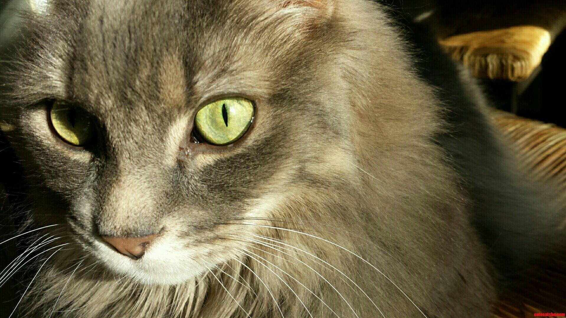 I Love Him - http://cutecatshq.com/cats/i-love-him-2/